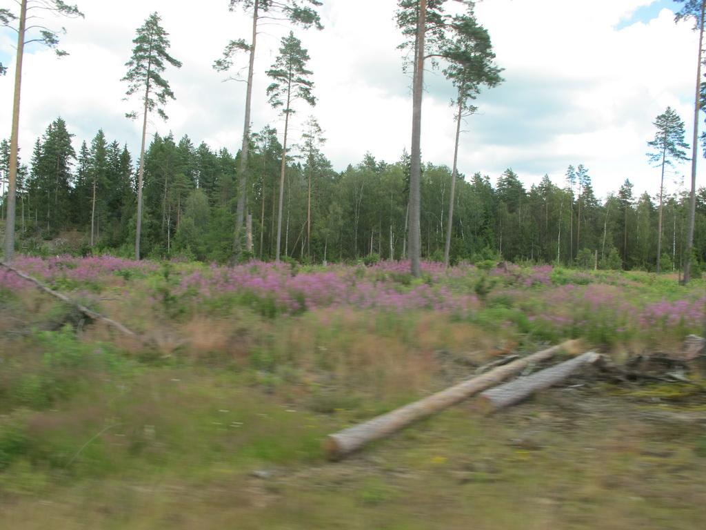 skandinavien2012_213
